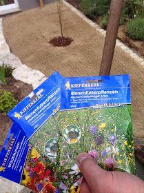 So legt man eine Wildblumenwiese an. Schritt für Schritt - einfach erklärt. So lockt man Bienen in seinen Garten. #blumenbeetanlegen