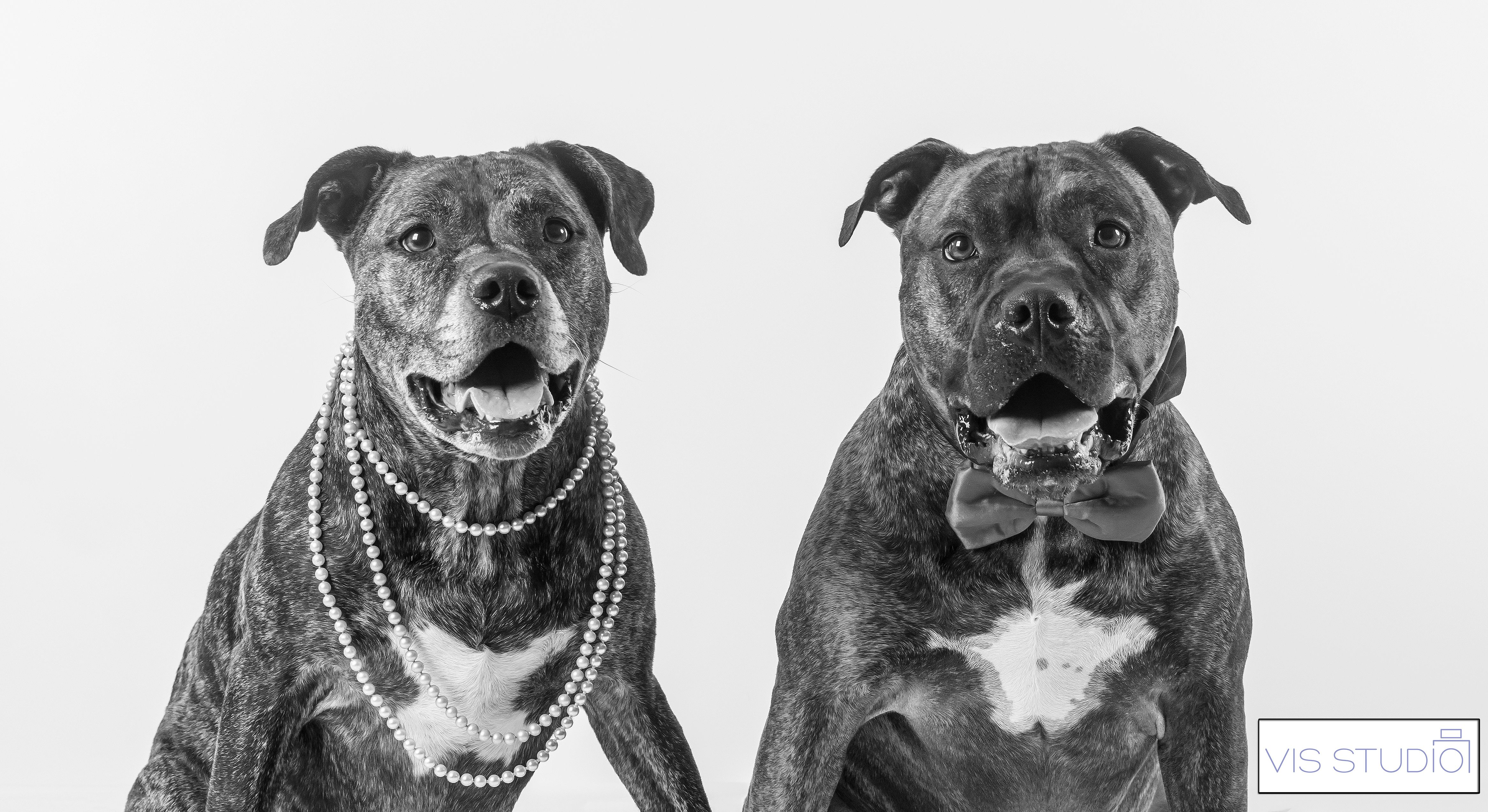 Pet photography , dog photography, puppy photos by VIS