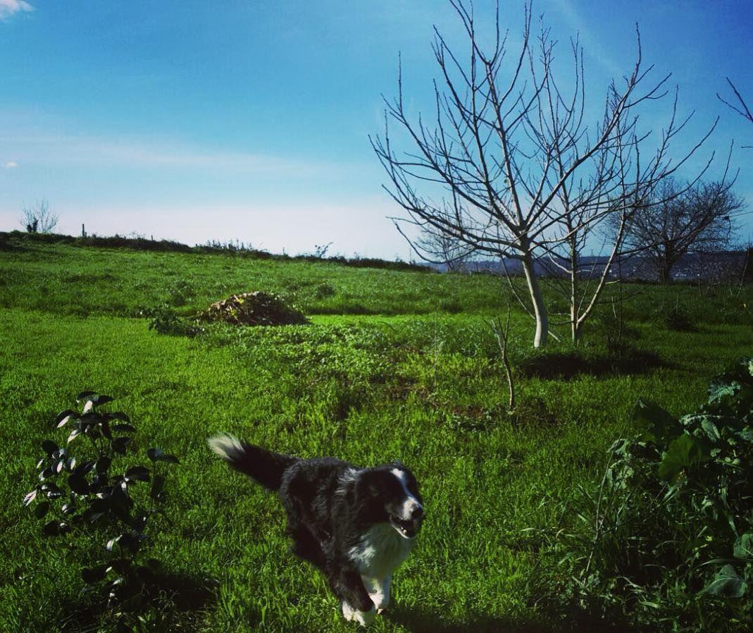 Running free by isastarkdc