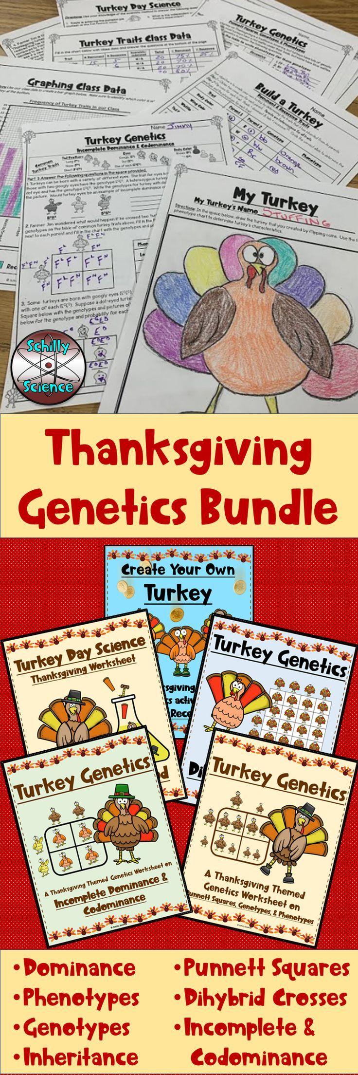 Thanksgiving Genetics Worksheet Bundle | Genetics ...