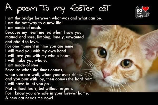 A Poem For People Who Foster Cats You Are The Critical Piece Of The Puzzle To Their Freedom Please Help Us Save Them Foste Foster Cat Cat Poems The Fosters