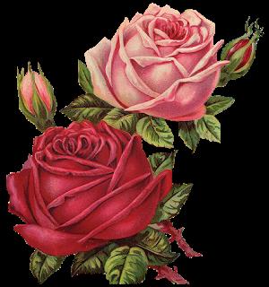 Leaping Frog Designs Vintage Pink And Red Roses Free Png Image Vintage Roses Vintage Flowers Flower Art