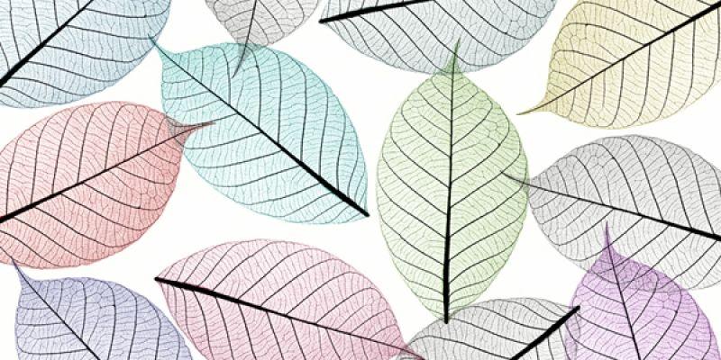 Skeleton Leaves Vinyl Flooring Skeleton Leaves Mural Floor Vinyl Flooring Leaf Structure Flooring