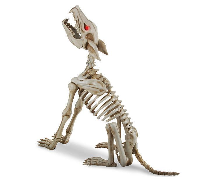 animated howling coyote wolf skeleton halloween decoration in stock now 2016 - Halloween Decorations Skeleton