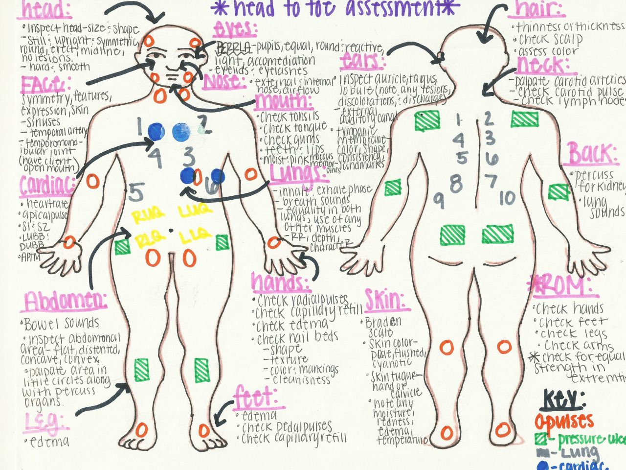 "artsciencenursing: head to toe assessment ""cheat sheet"" source"