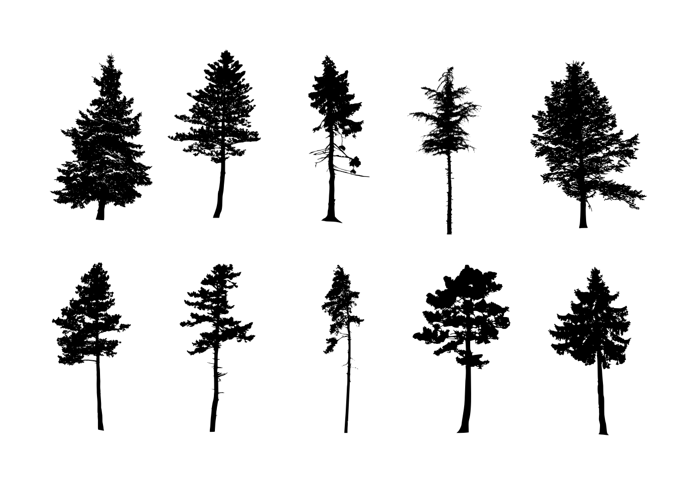 Resolution 735 1200 Px File Format Png File Size 119 84 Kb Free Download Pine Tree Silhouette 3 1 Pine Tree Silhouette Tree Tattoo Side Pine Tree Tattoo
