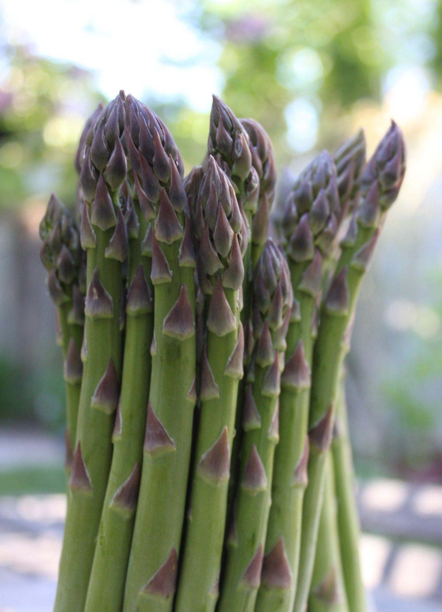Fresh Ontario asparagus.