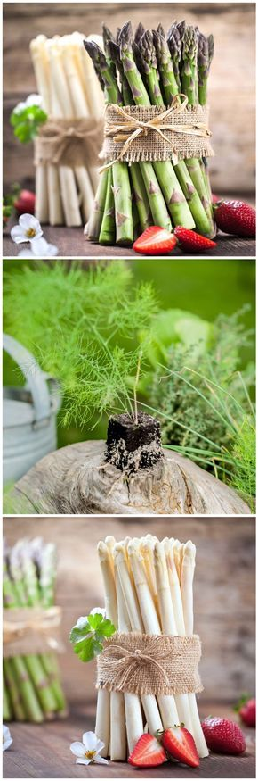 Spargel Anbauen Im Eigenen Garten Mit Spargeligx Ist Das Jetzt Moglich Gefunden Auf Www Tom Garten De Balkon Pflanzen Tom Garten Pflanzen
