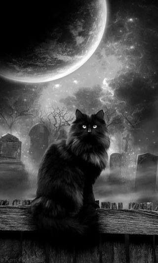 Black cat on cemetery with Super Moon...