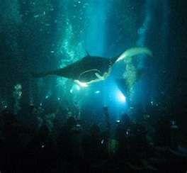 Manta Night Dive Off Kona On The Big Island Big Island Hawaii