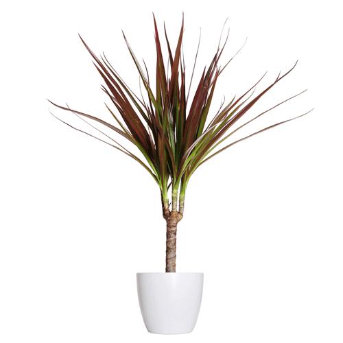 kamerplanten die weinig licht nodig hebben