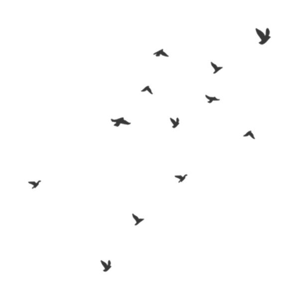 flock of birds ❤ liked on Polyvore featuring fillers, backgrounds, birds, effects, drawings, doodles, textures, text, quotes and embellishments