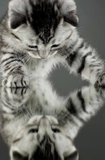 Olha tem outro gatinho aqui me olhando..