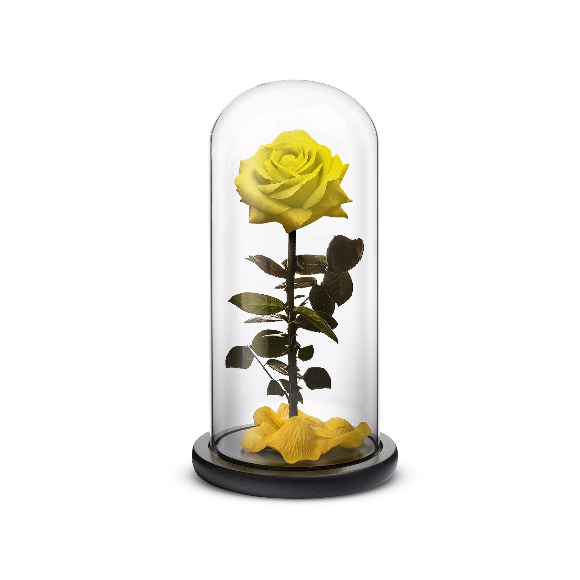 Everlasting Rose Rose in a glass, Growing flowers
