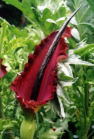 Plantas Mais Estranhas Do Mundo 3 Plantas Incomuns Flores