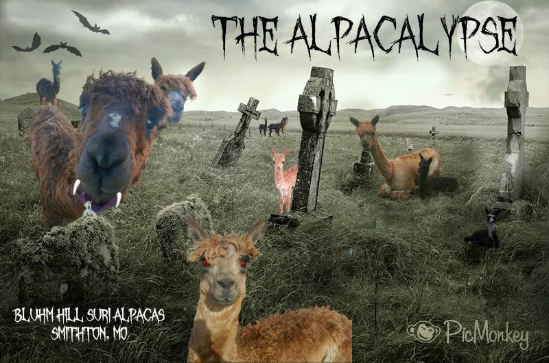 It's the Alpacalypse!