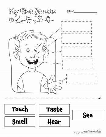 Five senses worksheets for preschool pdf