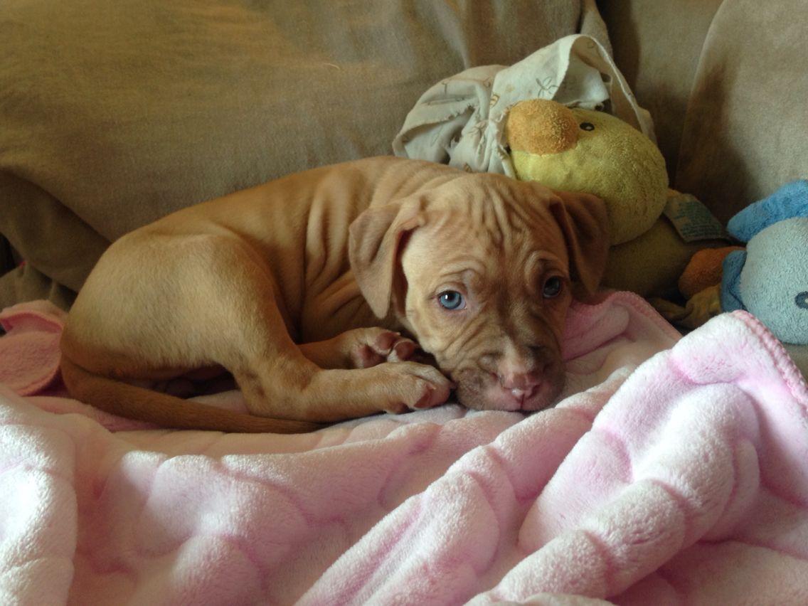 blue eyes puppy