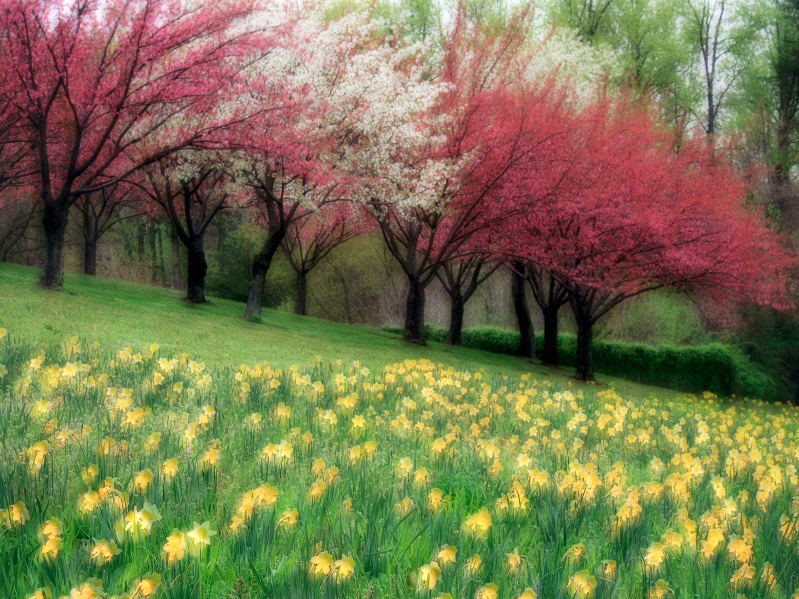 Spring Meadow Http Wallpapersdepo Net Free Photography Wallpapers Spring Meadow Beautiful Scenery Wallpaper Scenery Background Beautiful Scenery Pictures