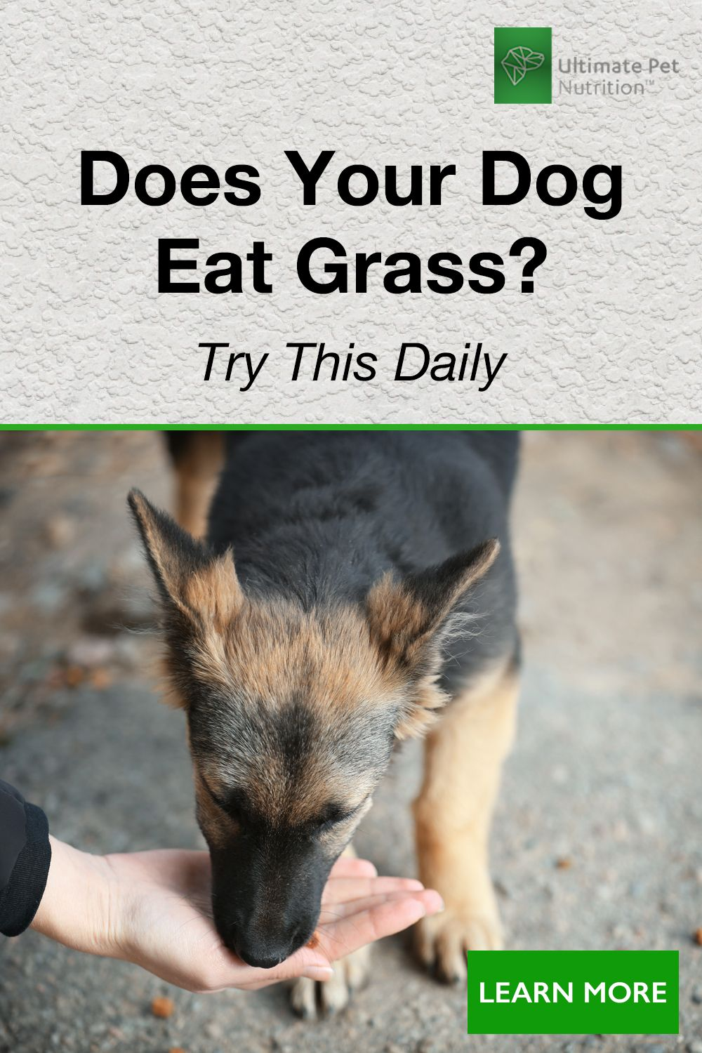 Try This Daily Dog eating