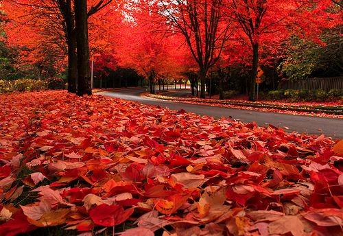 Autumn Leaves, The Cascades, Oregon  photo by photo