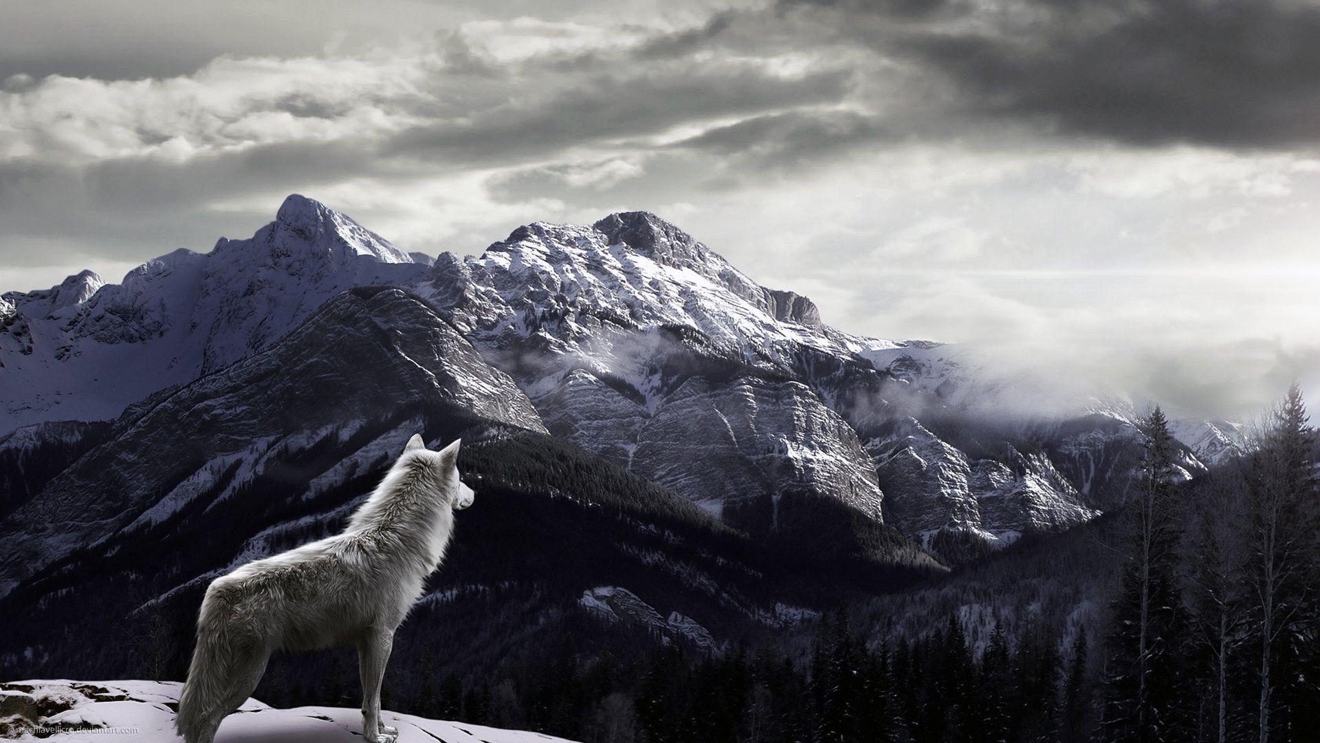 Best Wallpaper High Resolution Wolf - 5151b1a618e8c9107630718971ce0291  Collection_64682.jpg