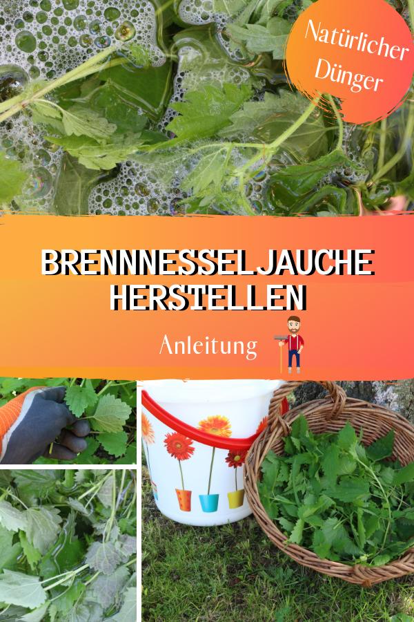 Brennnesseljauche Herstellen Anleitung Gartenschadlinge Pflanzen Brennnessel