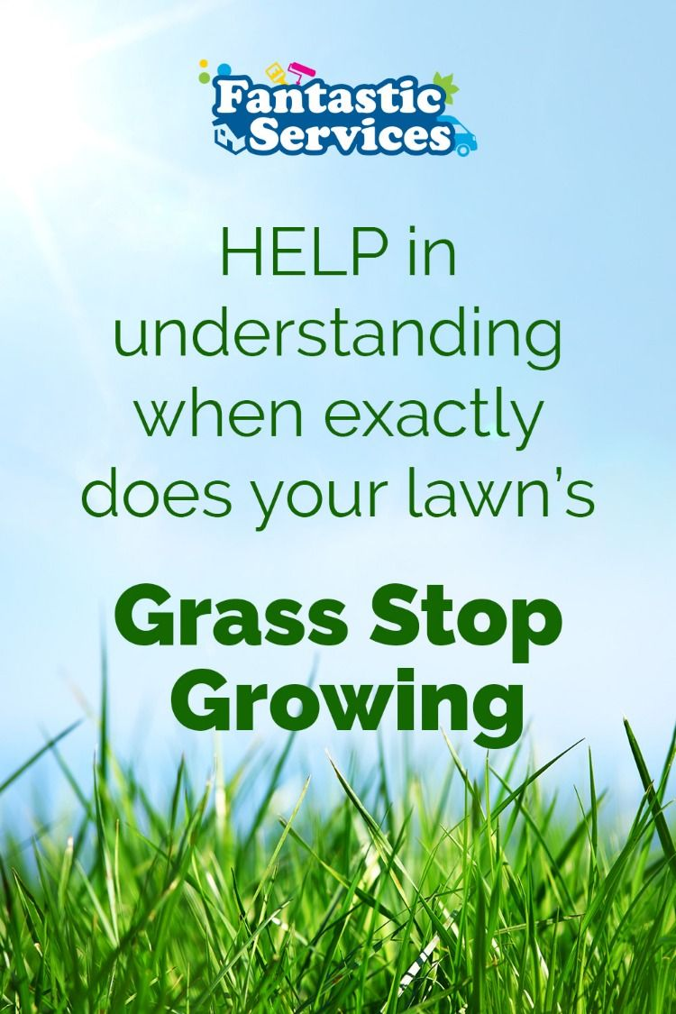 Help in Understanding When Exactly Does Your Lawn's Grass