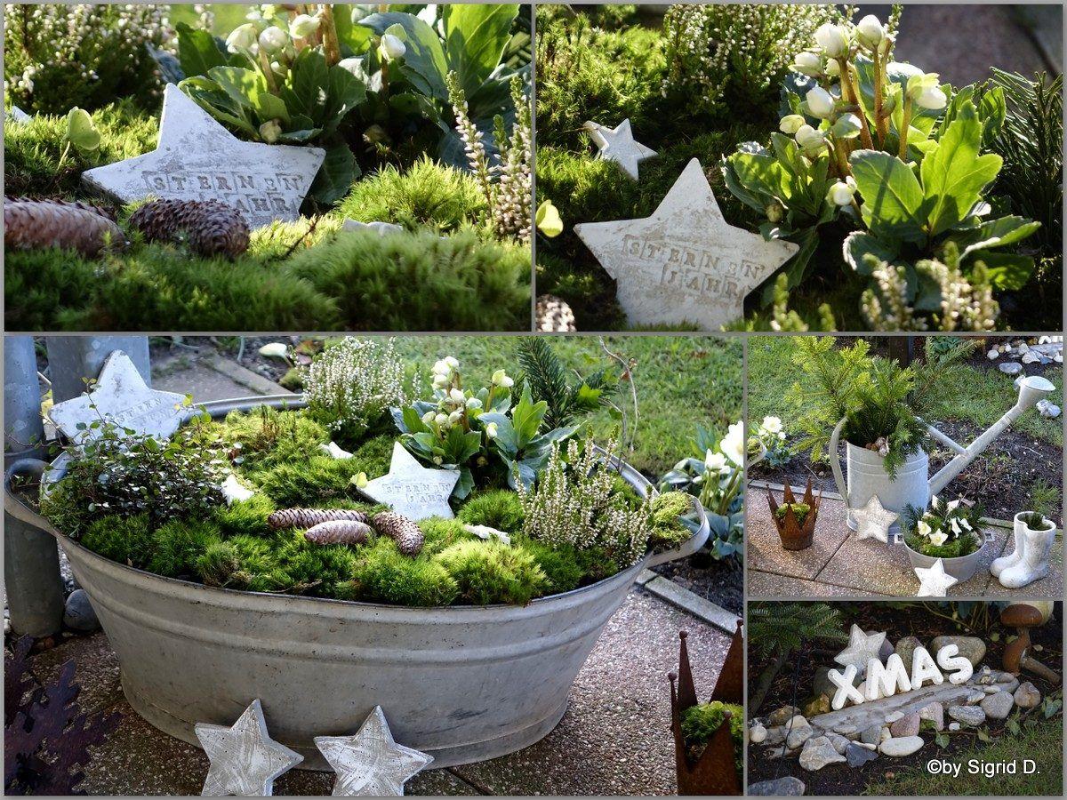 winter garden junk yard 8 best front yard garden images on