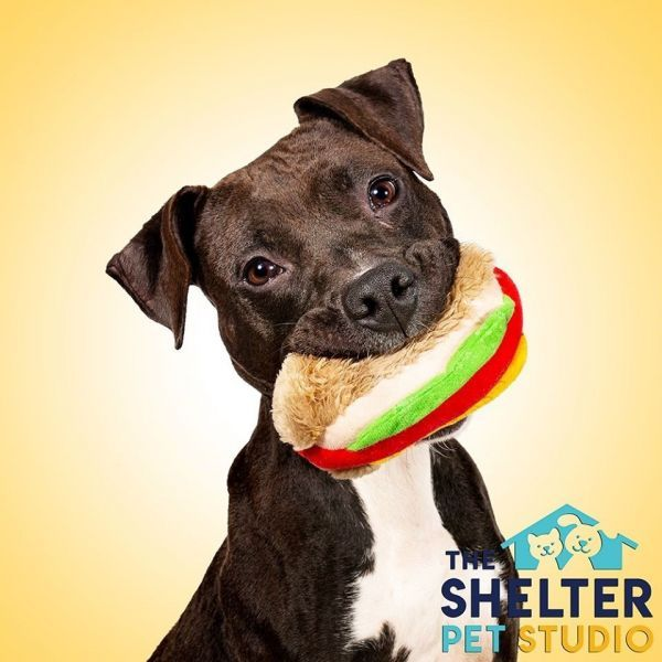 Pets for Adoption Petfinder in 2020 Pet dog pictures