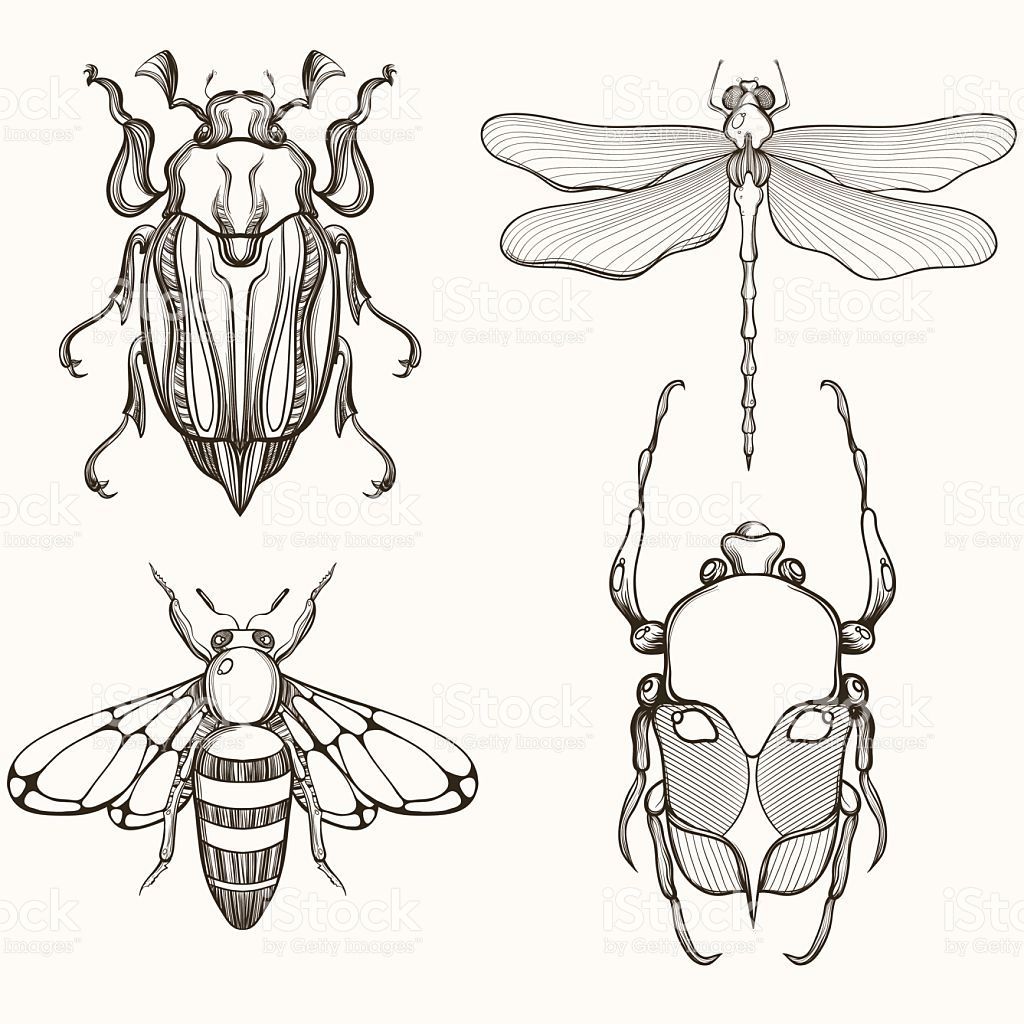 Hand drawn engraving Sketch of Scarab Beetle, May bug, Bee and…