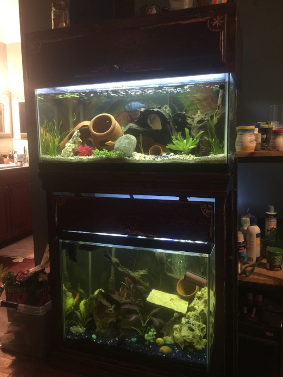 Image result for double fish tank stand | Aquarium | Pinterest | Fish tank stand, Tank stand and ...