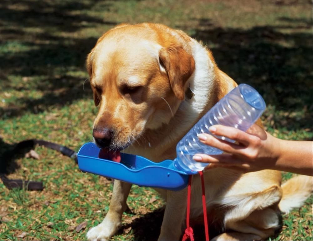 Foldable Pet Dog Water Drinking Bottle 250ml Blue Travel