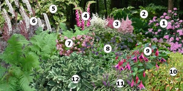 cr er un massif de fleurs l 39 ombre amenagement exterieur pinterest decoraciones de jard n. Black Bedroom Furniture Sets. Home Design Ideas