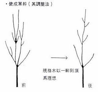 植樹修整的兩三事 @ 我家的老二 :: 隨意窩 Xuite日誌