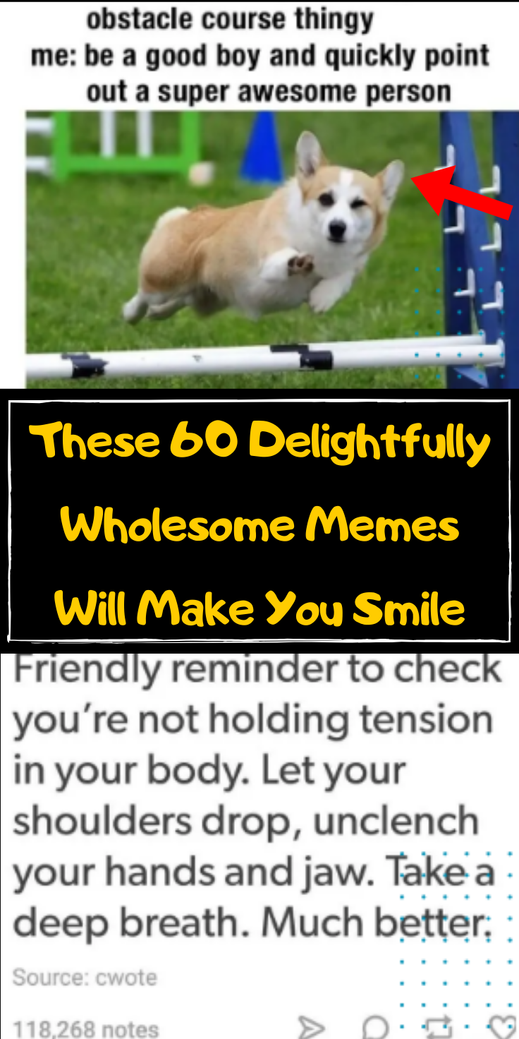 50 Wholesome And Quirky Memes That Will Restore Your Faith In Humanity Wholesome Memes Animals Animal Planet