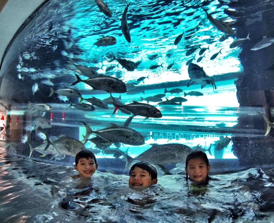 Free dolphin reef slot machine