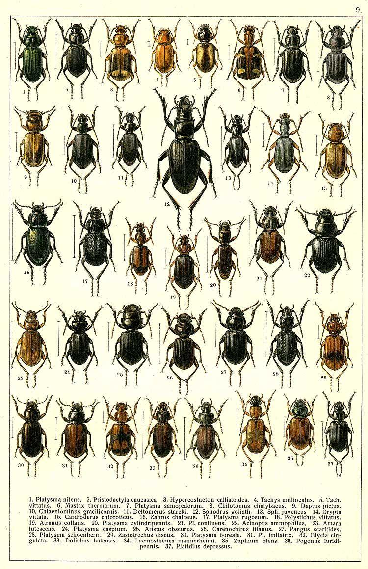 26+ Endopterygota information
