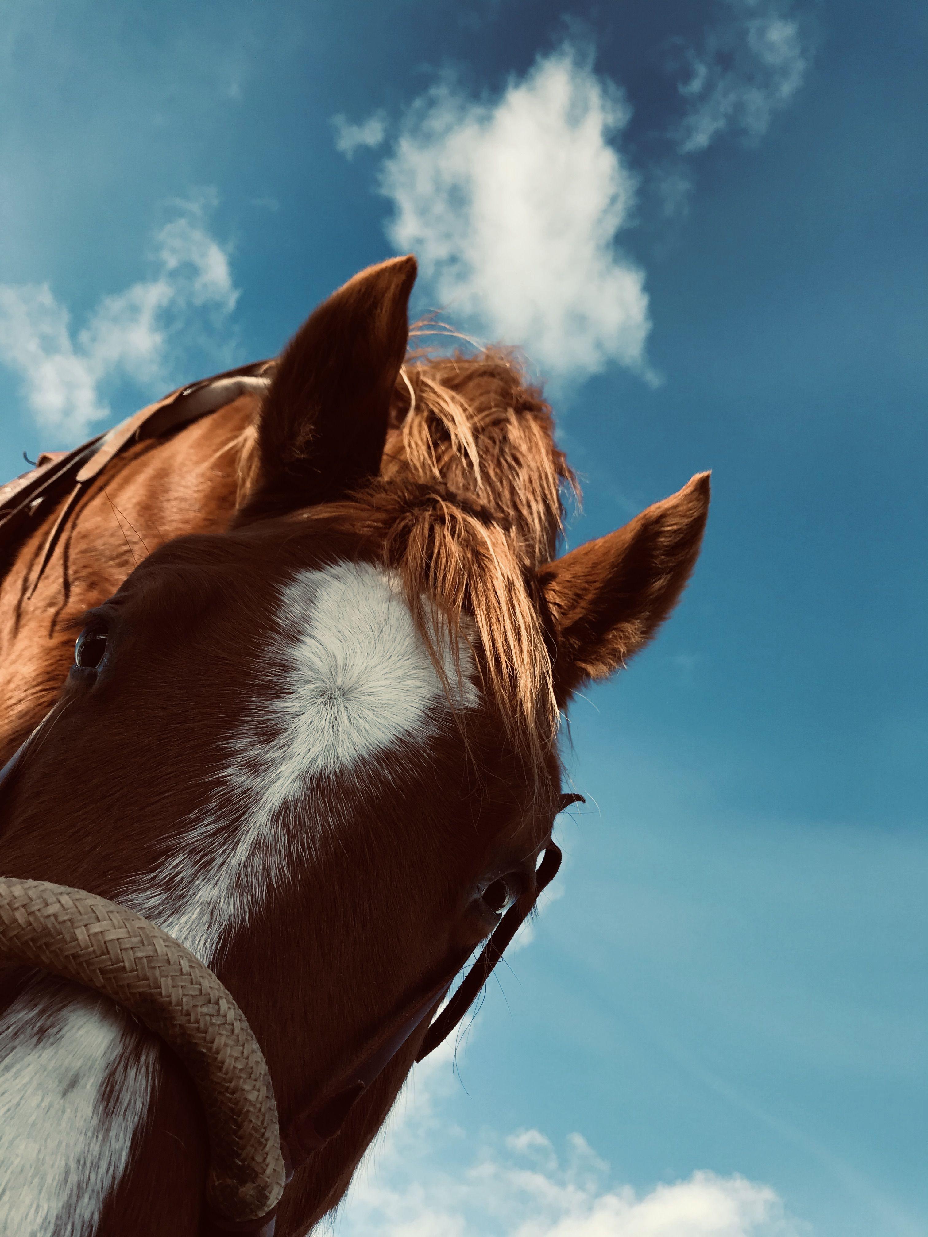 Soil,Grass,Beef | Fishburn Ranch | Pincher Creek,