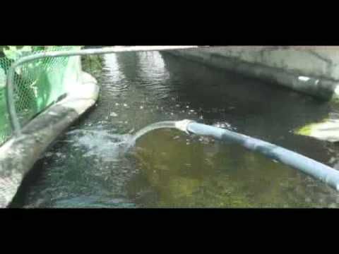 Filling The Aquaponics System With Water And Turning On The Pump