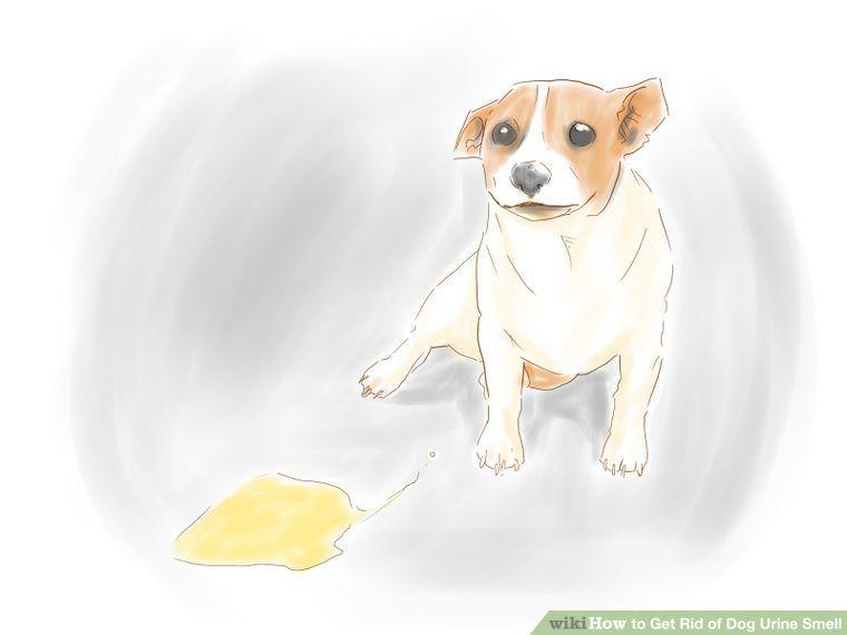 4 ways to get rid of dog urine smell dog urine pet