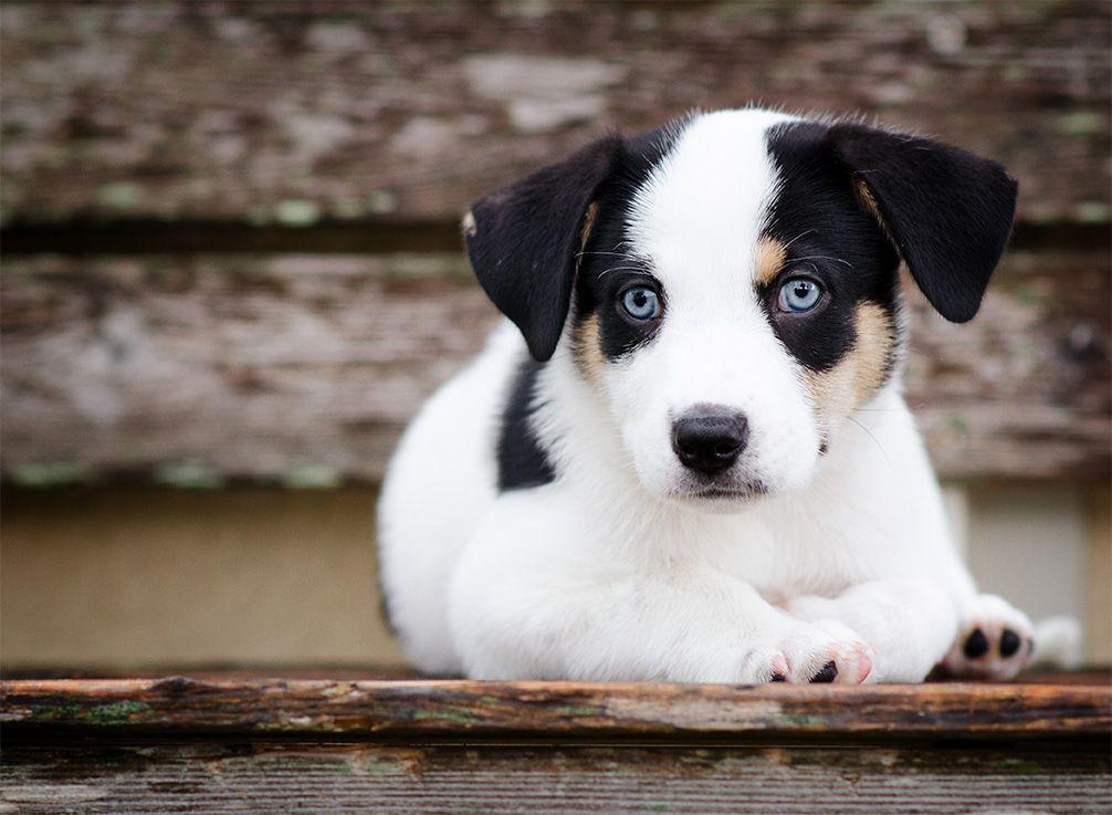 Boynton Beach Fl Border Collie Chow Chow Mix Meet Marley A Dog