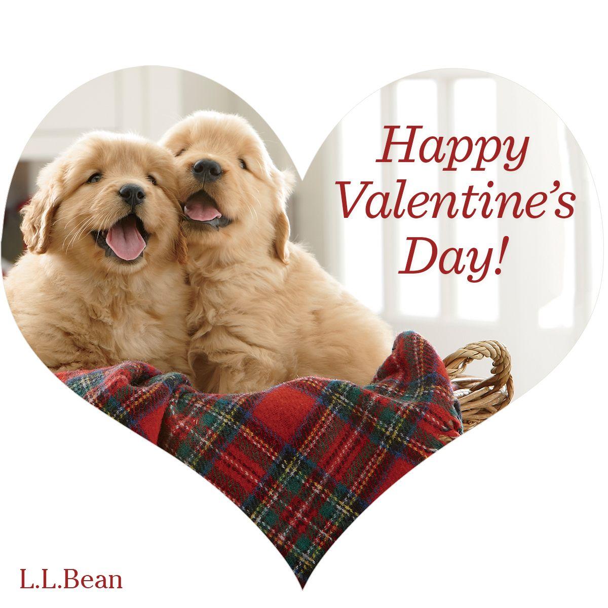 Happy Valentine's Day from #LLBean | Animals | Pinterest