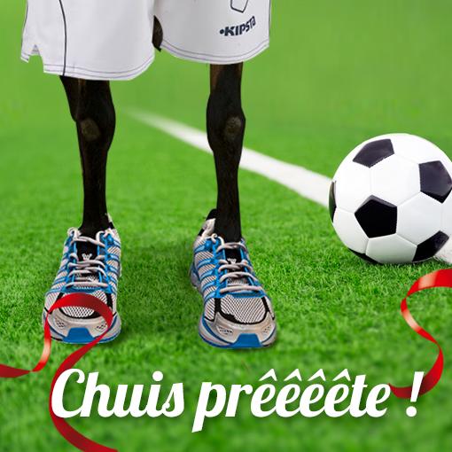 Notre #chevre #Soignon est prête pour la #CoupeDuMonde #CM2014