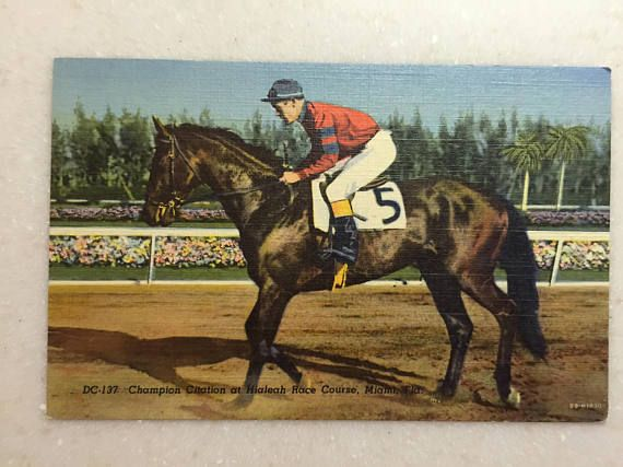 Vintage Postcard Champion Race Horse Citation Triple Crown Horses Thoroughbred Horse Racing Horse Racing