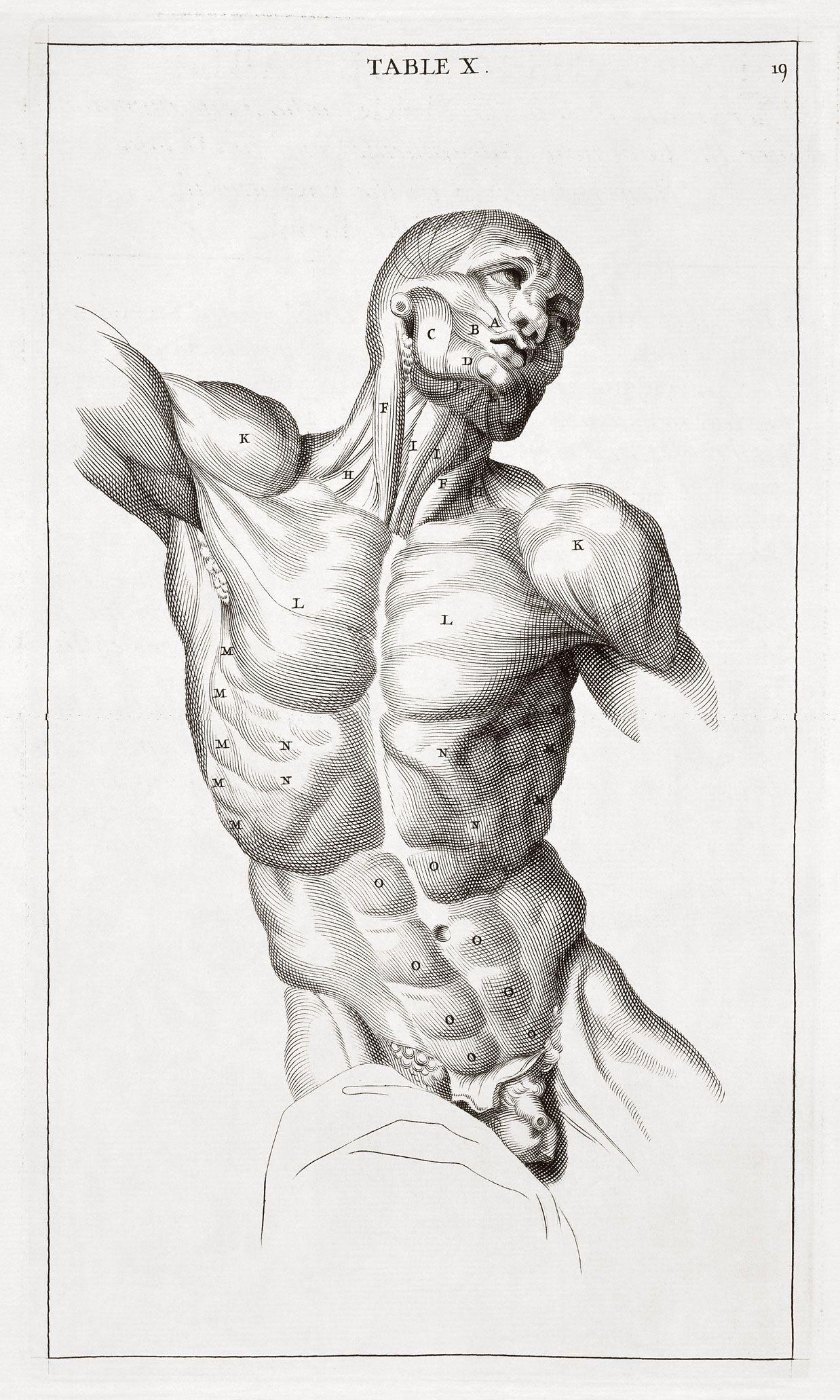 Anatomy Human Wallpaper 705127 Wallbase Cc Wallpaper Anatomy Human
