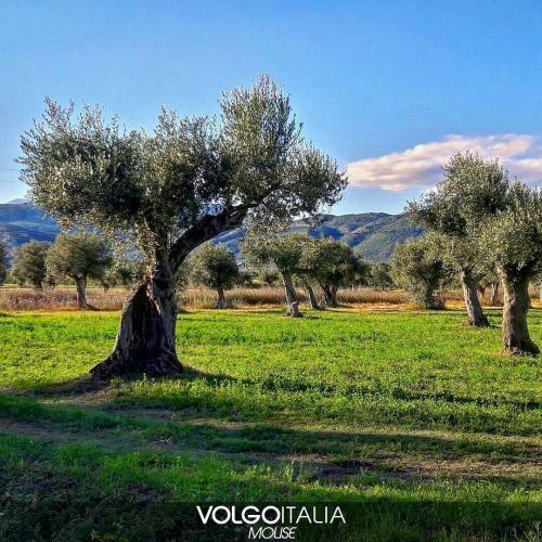 Molise: #Parco degli #ulivi - Venafro  Foto di @joefox1  #ve... (volgomolise) (link: http://ift.tt/2bGsrkX )