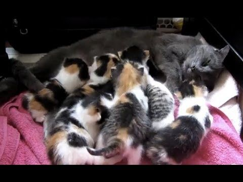 They Rescued This Mama Cat And Her 8 Kittens But Never Expected