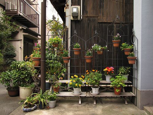 Potted Gardens Tokyos wabi sabi potted gardens garden pots gardens and garden ideas tokyo gardens potted garden container inspiration workwithnaturefo