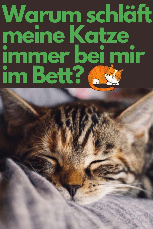 Warum schläft meine Katze immer bei mir im Bett? | Katzen